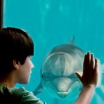 Dolphin Tale Photo Gallery