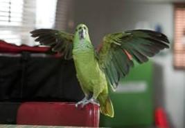 Oscar the Parrot