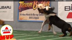 2012 Puppy Bowl MVP