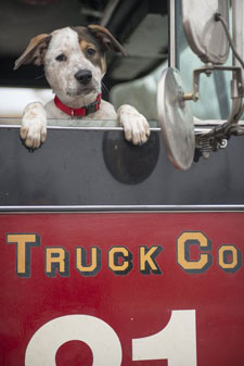 Pouch the Dog stars in Chicago Fire