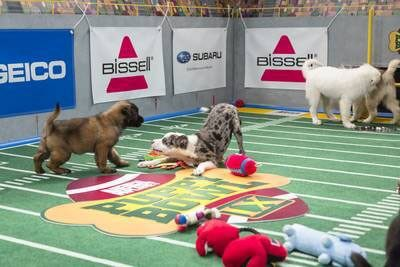 Puppy Bowl IX Puppies