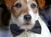 Uggie is the Humane Society's Spokesdog