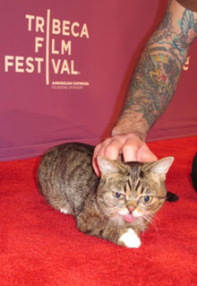 Lil Bub and Friendz Wins Tribeca Award
