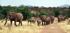 Poaching Wars with Tom Hardy