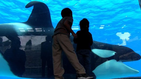 Blackfish movie review