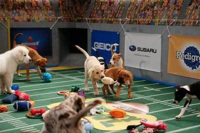 Puppy Bowl X Details