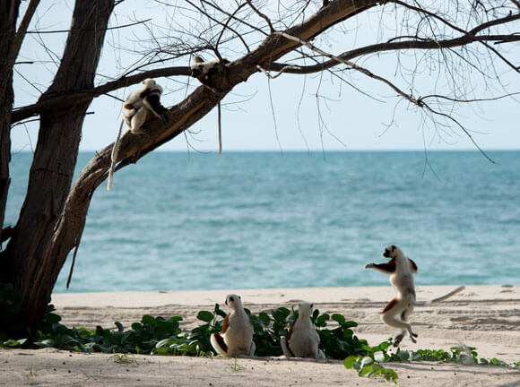 Island of Lemurs: Madagascar Dance Clip