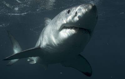 Shark Week vs Sharknado Week
