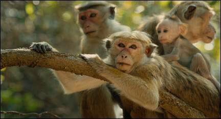 Monkey Kingdom Movie Trailer