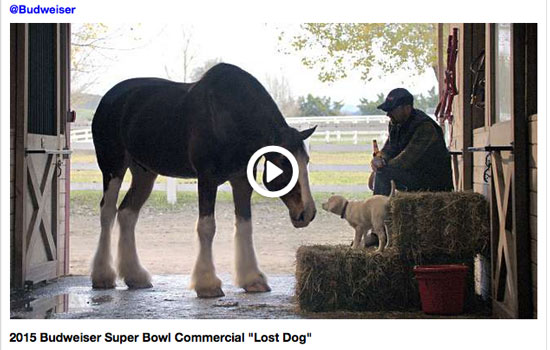 Budweiser Lost Dog Commercial Super Bowl 2015