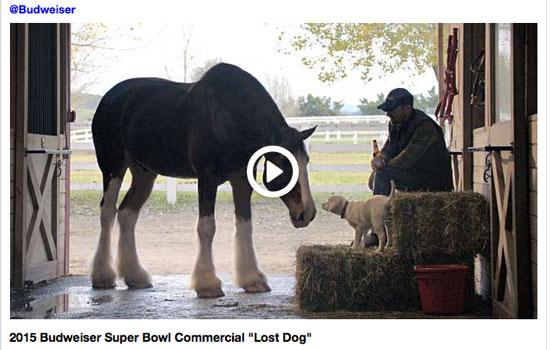 Budweiser Lost Dog Commercial Super Bowl 2015