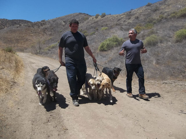 Cesar 911 Season 2 Details and Episode Guide
