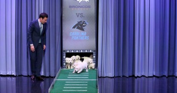 Puppies Predict Super Bowl