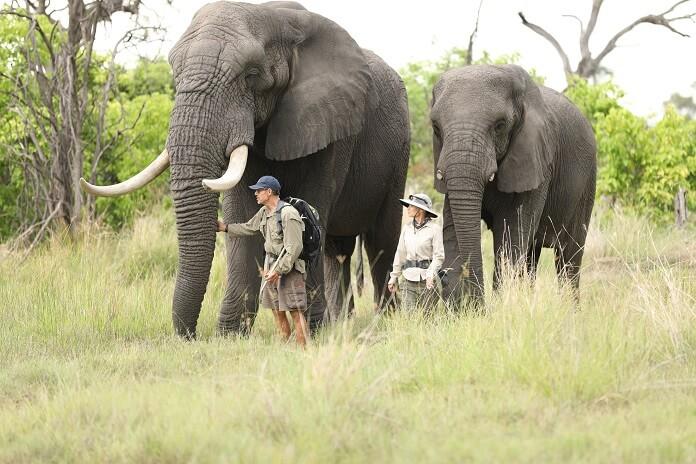 Dodoe Heroes Elephants