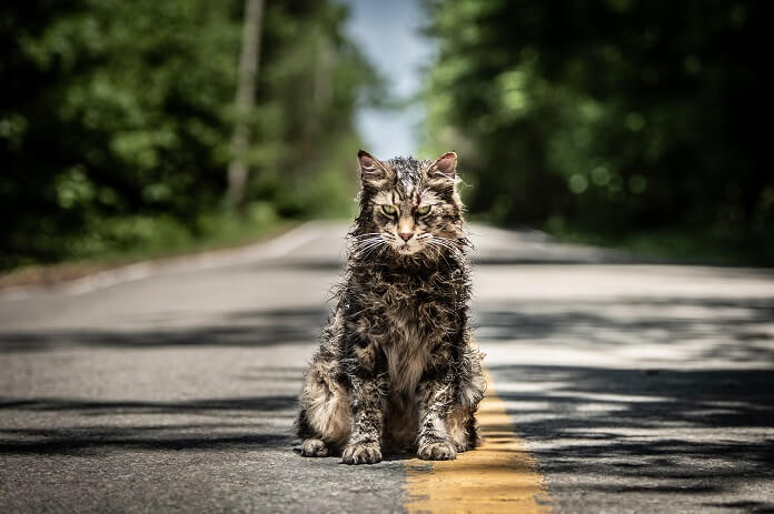 Horror Movies Preview - Pet Sematary Cat